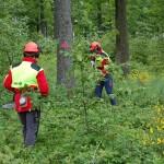 Wald: Daseinsvorsorge oder Profitwirtschaft?